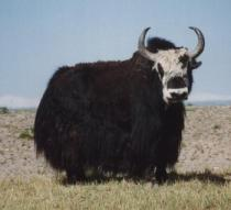 His name was Robert Paulson. Now he's yak butter.